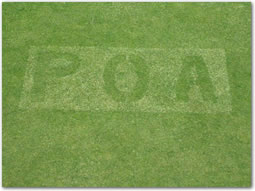 Grass with the letters POA growing outward